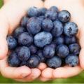 Manfaat Blueberry Bagi Kesehatan Tubuh 120x120 » Manfaat dan Kandungan Zat Blueberry Bagi Kesehatan Tubuh yang perlu Anda Tahu