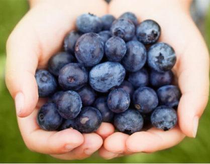 Manfaat Blueberry Bagi Kesehatan Tubuh 418x328 » Manfaat dan Kandungan Zat Blueberry Bagi Kesehatan Tubuh yang perlu Anda Tahu