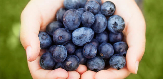 Manfaat Blueberry Bagi Kesehatan Tubuh 645x312 » Manfaat dan Kandungan Zat Blueberry Bagi Kesehatan Tubuh yang perlu Anda Tahu