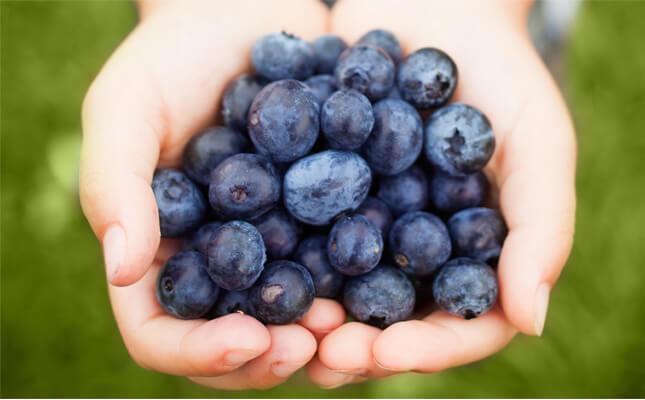 Manfaat Blueberry Bagi Kesehatan Tubuh » Manfaat dan Kandungan Zat Blueberry Bagi Kesehatan Tubuh yang perlu Anda Tahu