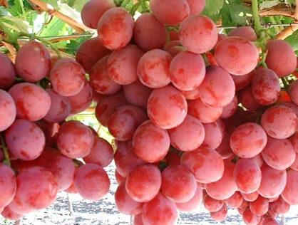 Manfaat Buah Anggur Bagi Kesehatan Tubuh 418x316 » Manfaat dan Kandungan Nutrisi Buah Anggur Bagi Kesehatan