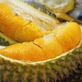 Manfaat Buah Durian Bagi Kesehatan Tubuh 120x120 » Manfaat dan Kandungan Gizi Buah Durian Bagi Kesehatan Tubuh
