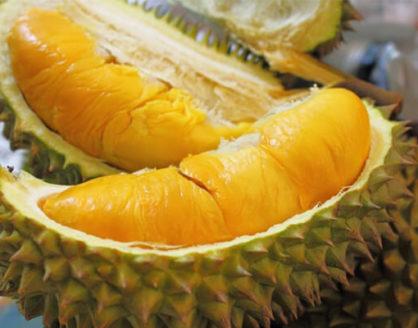 Manfaat Buah Durian Bagi Kesehatan Tubuh 418x328 » Manfaat dan Kandungan Gizi Buah Durian Bagi Kesehatan Tubuh