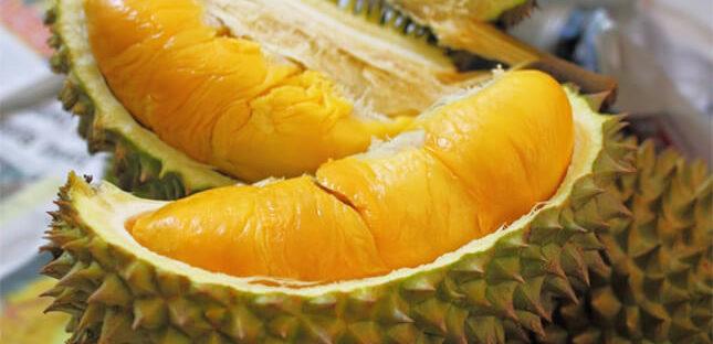 Manfaat Buah Durian Bagi Kesehatan Tubuh 645x312 » Manfaat dan Kandungan Gizi Buah Durian Bagi Kesehatan Tubuh