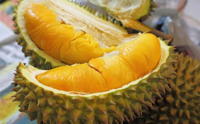 Manfaat Buah Durian Bagi Kesehatan Tubuh » Manfaat dan Kandungan Gizi Buah Durian Bagi Kesehatan Tubuh