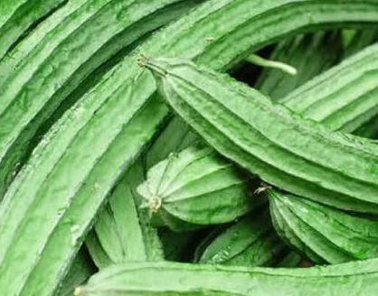Manfaat Oyong Bagi Kesehatan Tubuh 418x328 » Manfaat dan Kandungan Gizi Sayuran Oyong Bagi Kesehatan