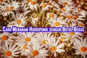 cara menanam hidroponik dengan botol bekas 300x200 » Cara Budidaya Tanaman Metode Hidroponik dengan Botol Bekas