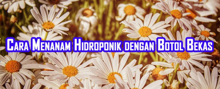 cara menanam hidroponik dengan botol bekas 772x312 » Cara Budidaya Tanaman Metode Hidroponik dengan Botol Bekas