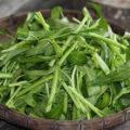 kandungan nutrisi dan manfaat kangkung bagi kesehatan 120x120 » Kandungan Gizi dan Manfaat Kangkung Bagi Kesehatan Tubuh
