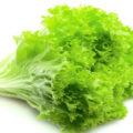 manfaat dan kandungan gizi selada untuk kesehatan 120x120 » Manfaat Selada Untuk Kesehatan dan Kandungan Gizinya
