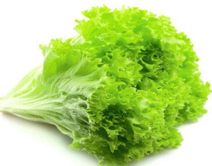 manfaat dan kandungan gizi selada untuk kesehatan 418x328 » Manfaat Selada Untuk Kesehatan dan Kandungan Gizinya