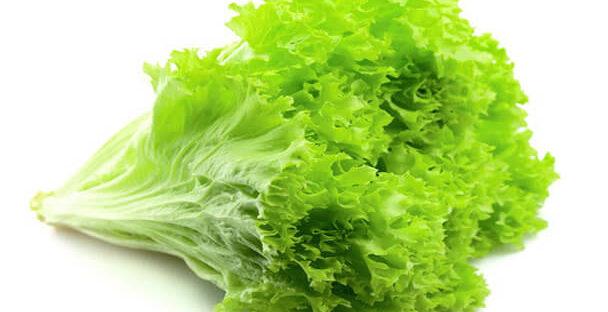 manfaat dan kandungan gizi selada untuk kesehatan 608x312 » Manfaat Selada Untuk Kesehatan dan Kandungan Gizinya