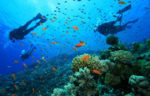 panorama bawah air taman nasional teluk cendrawasih papua 300x192 » Panorama Taman Nasional Teluk Cendrawasih, Objek Wisata Menarik di Papua