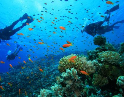panorama bawah air taman nasional teluk cendrawasih papua 418x328 » Panorama Taman Nasional Teluk Cendrawasih, Objek Wisata Menarik di Papua