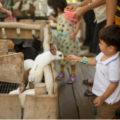 tempat wisata anak bandung lactasari minifarm 120x120 » Tempat Wisata Anak di Bandung Yang Wajib Dikunjungi saat Liburan Sekolah
