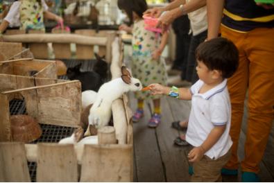 tempat wisata anak bandung lactasari minifarm » Tempat Wisata Anak di Bandung Yang Wajib Dikunjungi saat Liburan Sekolah