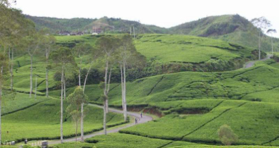 tempat wisata ciwidey bandung kebun teh rancabali » Ini Dia Tempat Wisata di Ciwidey Yang Wajib Dikunjungi saat Liburan
