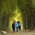 tempat wisata surabaya hutan bambu taman harmoni keputih 120x120 » Rekomendasi Objek Wisata di Surabaya Untuk Liburan Bersama Keluarga