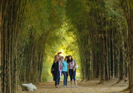 tempat wisata surabaya hutan bambu taman harmoni keputih 445x312 » Rekomendasi Objek Wisata di Surabaya Untuk Liburan Bersama Keluarga