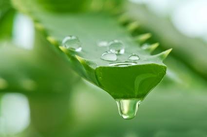 tumbuhan lidah buaya » Cara Mengontrol Minyak Di Kulit Menggunakan Bahan Alami