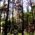 wisata alam punti kayu palembang 120x120 » Eksotisme Punti Kayu, Taman Hutan Wisata Legendaris di Palembang
