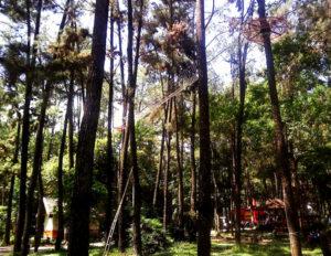 wisata alam punti kayu palembang 300x232 » Eksotisme Punti Kayu, Taman Hutan Wisata Legendaris di Palembang