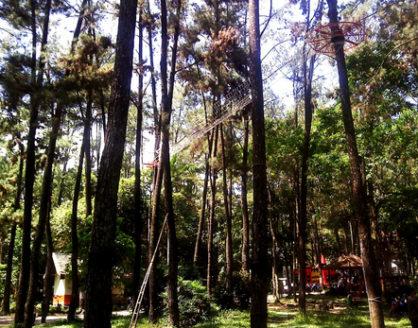 wisata alam punti kayu palembang 418x328 » Eksotisme Punti Kayu, Taman Hutan Wisata Legendaris di Palembang