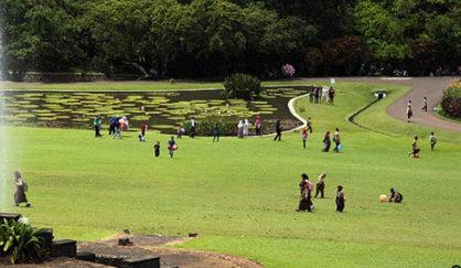wisata kebun raya bogor 418x243 » 4 Keunikan Kebun Raya Bogor, Wisata Kebanggaan Kota Hujan