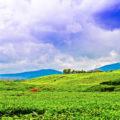 wisata kebun teh kayu aro jambi 120x120 » 3 Fakta Unik Seputar Perkebunan Teh Kayu Aro Jambi yang Wajib Anda Tahu